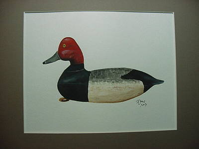 Waterfowl Painting - Harry Shourds Redhead Drake by Phil Jones