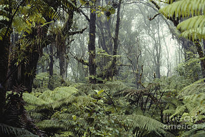 Epiphyte Photograph - Hawaiian Rainforest by Gregory G. Dimijian, M.D.