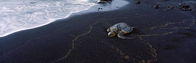 Hawksbill Turtle Eretmochelys Imbricata Art Print by Panoramic Images