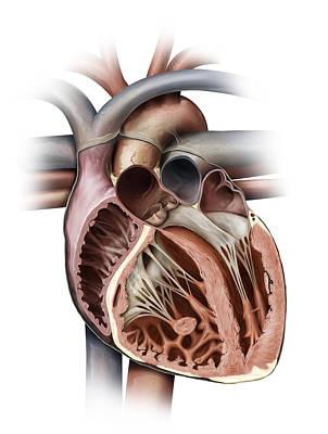 Photograph - Heart, Illustration by QA International
