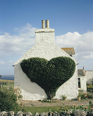 Photograph - Heart-shaped Ivy Vine by David Parker