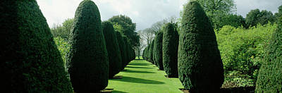 In A Row Photograph - Hedge In A Formal Garden, Hinton Ampner by Panoramic Images