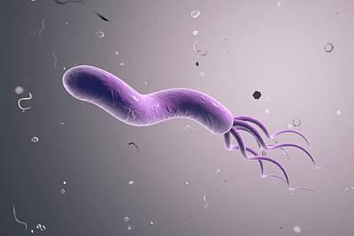 Helicobacter Pylori Photograph - Helicobacter Pylori Bacterium by Kateryna Kon
