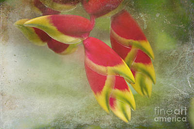 Photograph - Heliconia Rostrata by Sharon Mau