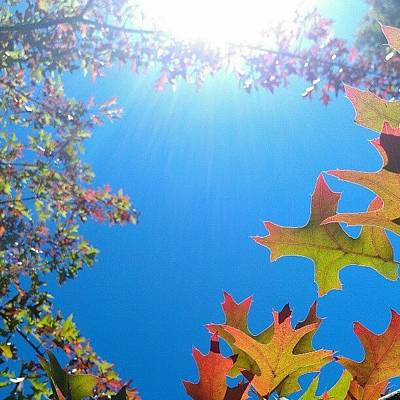 Sunny Photograph - Hello Autumn by CML Brown