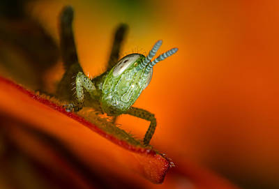 Photograph - Hello Grass Hopper by Tin Lung Chao