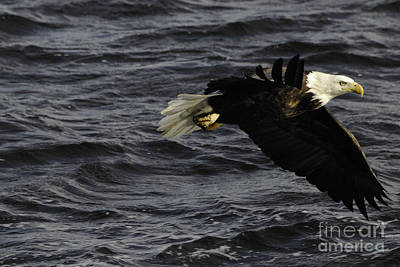 Eagle Photograph - Hello by Robert Smice