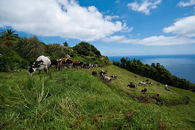Photograph - Herd Of Cows On A Hillside by Joseph Amaral