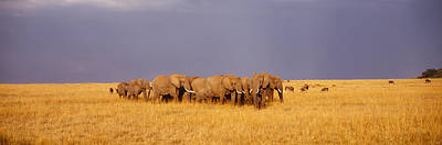 Herd Of Elephants On A Grassland, Masai Art Print by Panoramic Images