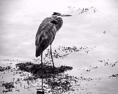 Photograph - Heron In Black And White by Janice Drew