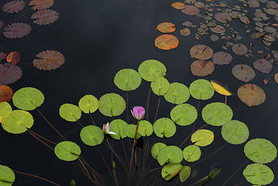 High Angle View Of Lily Pads In Pond Art Print by Panoramic Images