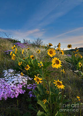 Phlox Photograph - High Desert Spring by Mike  Dawson