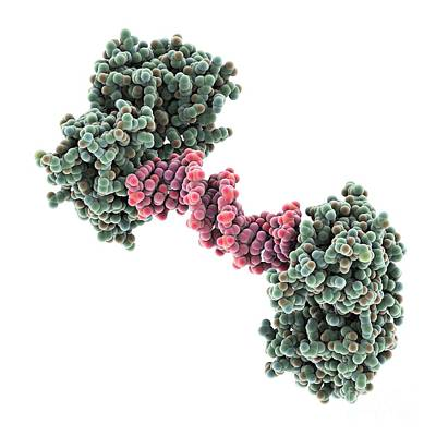 Hiv-1 Polypurine Tract, Molecular Model Art Print by Laguna Design