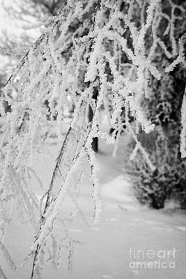 hoar frost on overhanging bare tree branches during winter Forget Saskatchewan Canada Art Print