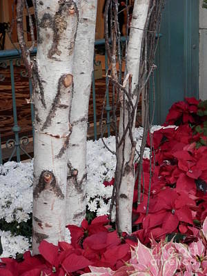 Photograph - Holiday Birch by L Cecka