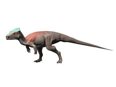 Celebrity Watercolors - Homalocephale Is A Pachycephalosaur by Nobumichi Tamura