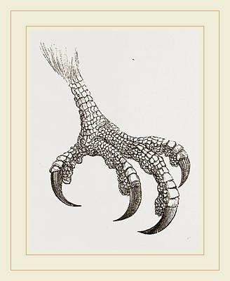 Buzzard Drawing - Honey-buzzard by Litz Collection