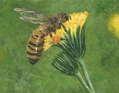 Painting - Honeybee On Hawkweed by Lucinda VanVleck
