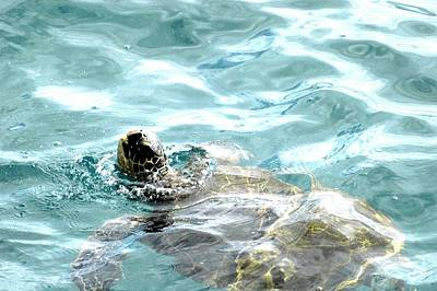 Art Print featuring the photograph Kamakahonu, The Eye Of The Honu  by Lehua Pekelo-Stearns
