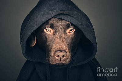 Hoodies Photograph - Hooded Dog by Justin Paget