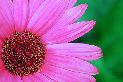 Photograph - Pink Gerbera Flower by Crystal Wightman