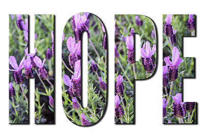 Photograph - Hope In Spanish Lavender On White From The Faith Hope And Love Series by Karen Stephenson