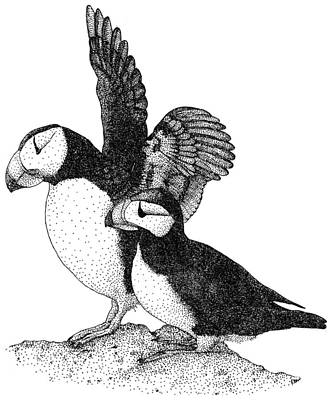 Photograph - Horned Puffins by Roger Hall