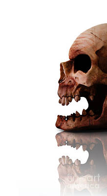 Departed Photograph - Horror Head by Jorgo Photography - Wall Art Gallery