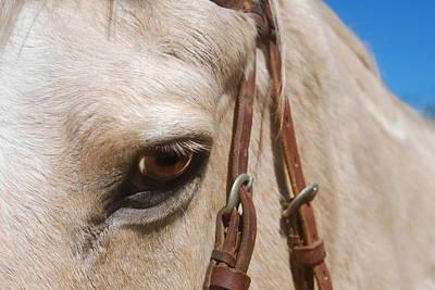 Photograph - Horse Eye by Larah McElroy