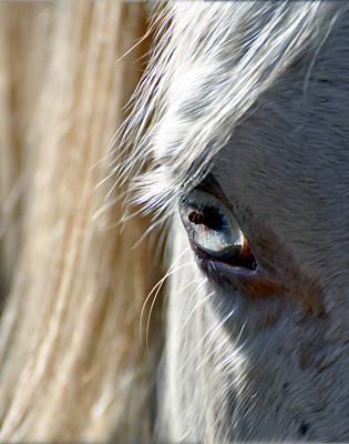 Horse Eye Art Print by Savannah Gibbs