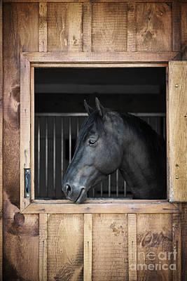 Animals Photos - Black horse in stable by Elena Elisseeva