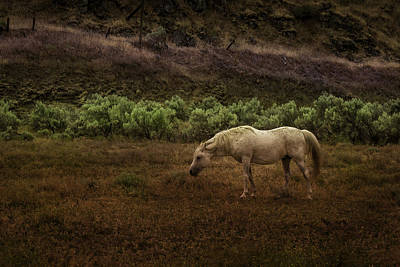 Photograph - Horse by Jean-Jacques Thebault