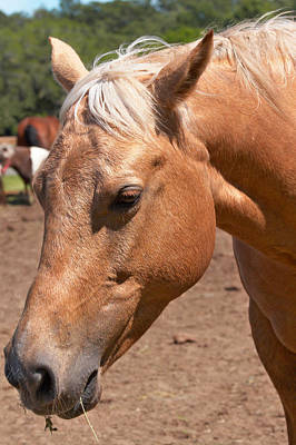 Photograph - Horse Portrait by Mary Almond