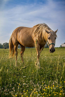 Photograph - Horse by Ron Pate