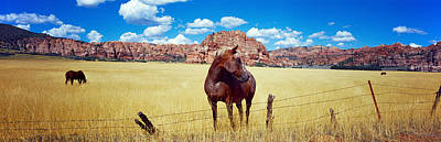 Horses Grazing In A Meadow, Kolob Art Print by Panoramic Images