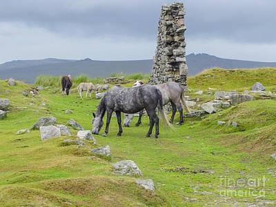 Horses On The Moors Of Dartmoor Art Print