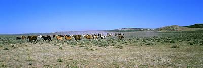 Horses Running In A Field, Colorado, Usa Art Print