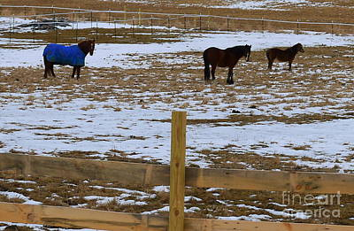 Nancie Martin Demellia Photograph - Horses Three by Nancie DeMellia
