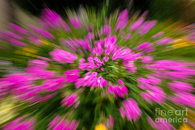 Photograph - Hot Pink Flower Zoom by Grace Grogan