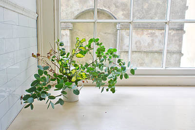 Ledge Photograph - House Plant by Tom Gowanlock