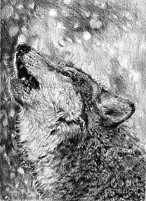 Drawing - Howling by J McCombie