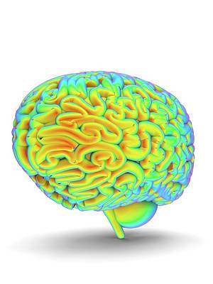 Human Brain Art Print by Alfred Pasieka