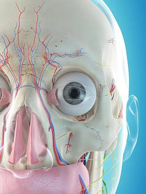 Front View Photograph - Human Face Anatomy by Sciepro