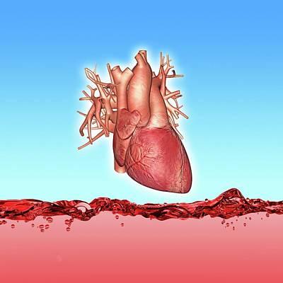 Human Heart Print by Alfred Pasieka