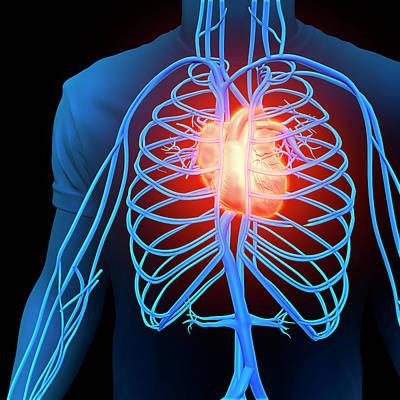 Human Heart And Circulatory System Art Print
