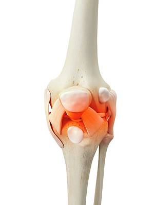 Human Knee Bones Art Print by Sciepro