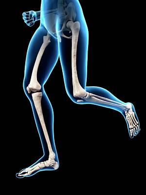 Biomedical Illustration Photograph - Human Leg Bones by Sebastian Kaulitzki