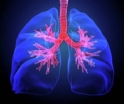 Airways Photograph - Human Lungs by Andrzej Wojcicki