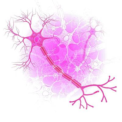 Human Nerve Cell Art Print by Pixologicstudio