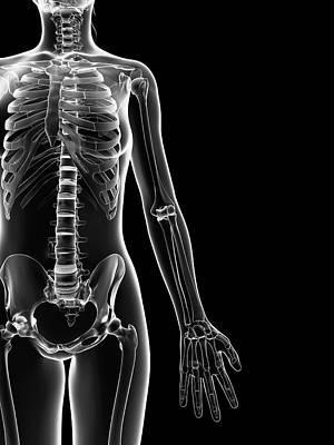 Human Skeleton Art Print by Sebastian Kaulitzki